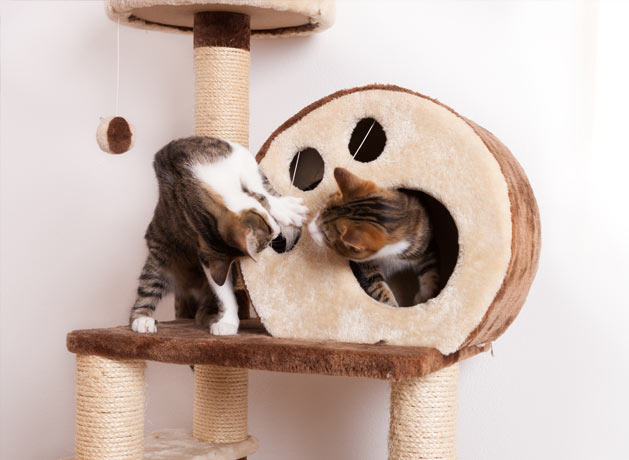 Two cats playing in a cat tree